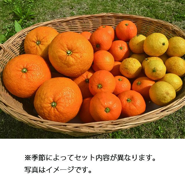 【静岡DC】南伊豆湯の花直送 旬の果物セット 送料込