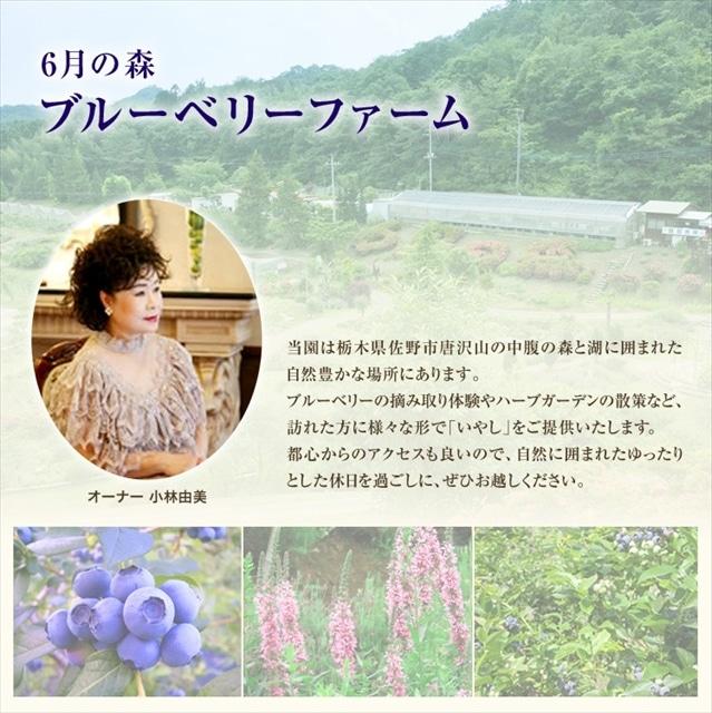 <栃木産直市2020>6月の森 ブルーベリーチーズケーキ  ナパージュ 送料込