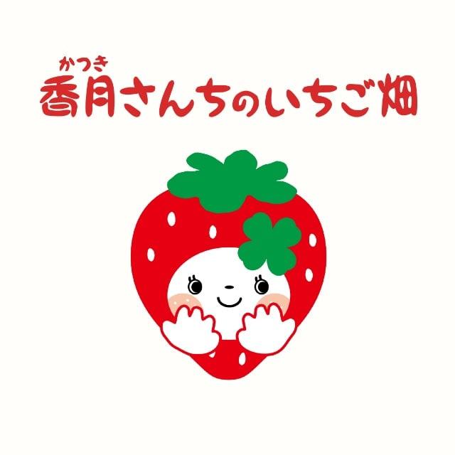 香月さんちのいちご畑 さがほのか大玉500g(15玉)送料込