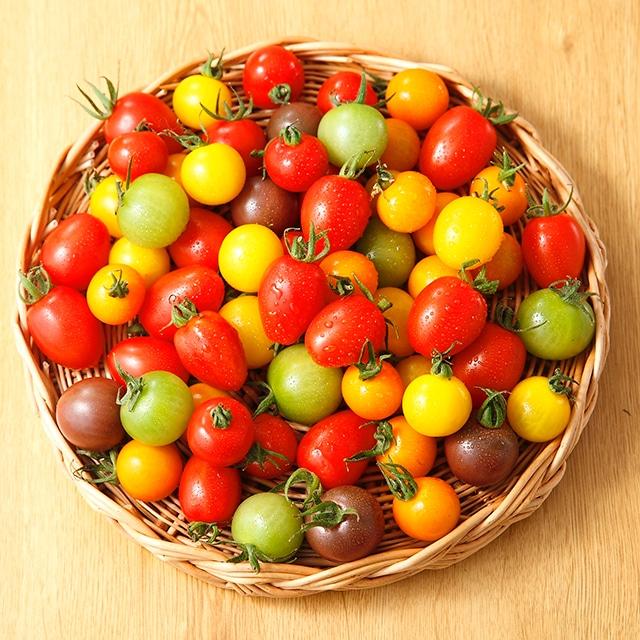 ワンダーファーム トマトの宝石箱1.6kg 送料込