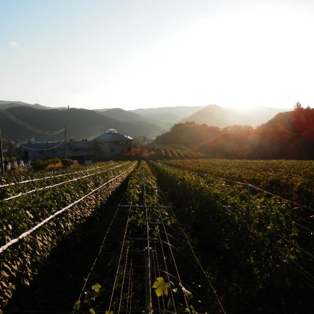 エーデルワイン 赤白ワインセット(LKA) 送料込