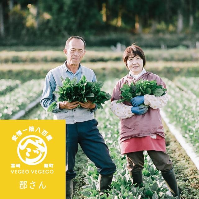 ★NEW★【ご予約】3月の「宮崎県綾町 こだわり野菜セット」 送料込