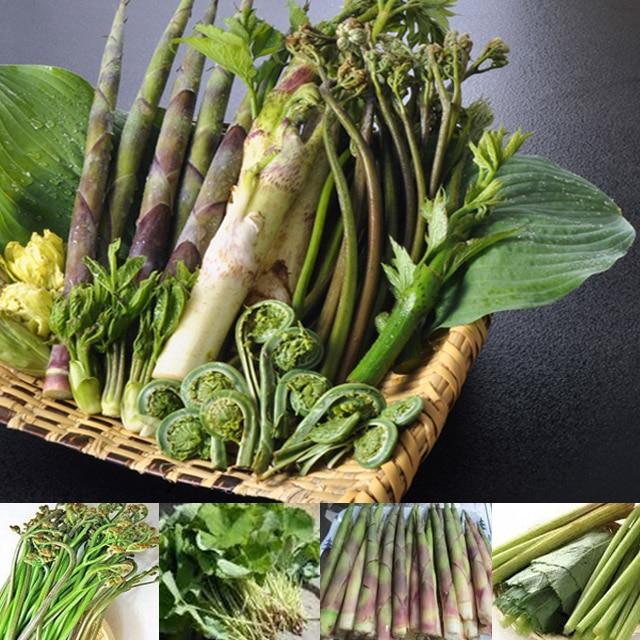 国産野菜&無添加 マルアイ食品 天然山菜ごはんの素 200g(2合用)×10袋 送料無料