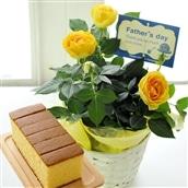 【2020父の日】父の日ギフト 花とスイーツ 黄色バラ鉢+はちみつカステラ セット 6月19-21日の期間でお届け フラワーギフト 送料無料 FKPP